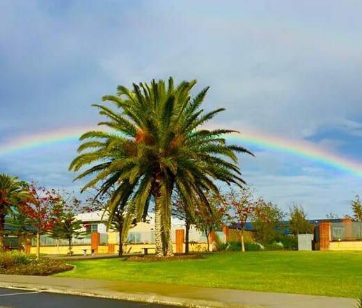 Palm tree rainbow